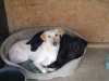 dogs2010-022